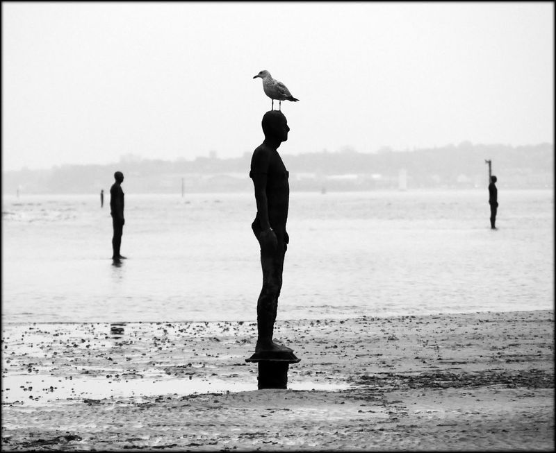 Another Place Antony Gormley Birdlife On The Beach Crosby Beach Lifes A Beach Liverpool Monochrome Original Experiences Seagull