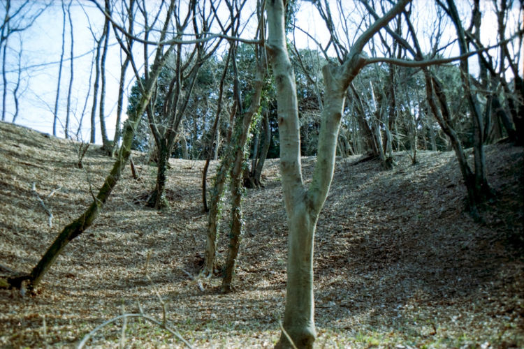 Film Photography Day No People Outdoors Nature Tree Beauty In Nature Green Color Forest Filtered Image Photoshop Machida Yakushiike 薬師池公園