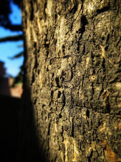 find the subject Ant Photography Barks Of A Tree Bark Texture Natural Pattern Natural Light Nature Photography Day No People Textured  Outdoors Close-up Built Structure Architecture Sky Nature