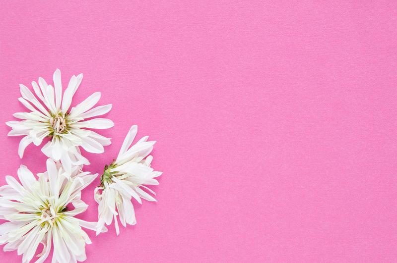 Freshness Pink