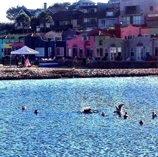 A beach goer's paradise ☀️🌊 Capitolavillage View By The Sea Animals In The Wild Bird Water