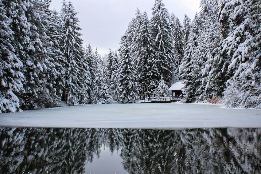 Icy lake❄️ Snow Tree Winter Pine Tree Pinaceae Cold Temperature Forest Nature Frozen WoodLand Day Scenics Beauty In Nature Tranquility Outdoors