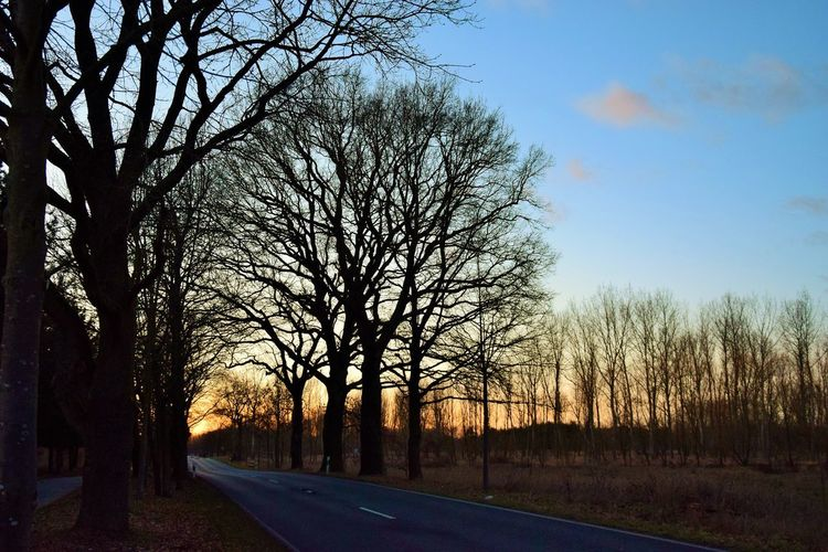 Allen einen schönen Abend. Tree Sky Road Plant Transportation Bare Tree The Way Forward Direction Tranquility No People Nature Tranquil Scene Scenics - Nature Beauty In Nature Sunset Silhouette Sign Outdoors Landscape Tree Trunk Diminishing Perspective Treelined Forest Evening Sky Evening Light