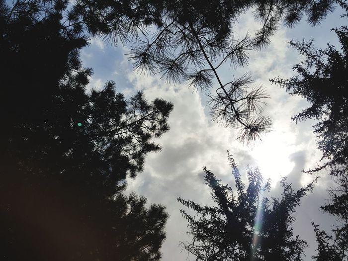 Nature NİSAN Ağaçlar ♥♡♥ Trees Yeşil Doğa Gökyüzü❄⛄🎑 Gok Sky Forest Tree Forest Silhouette Bird Sky Cloud - Sky