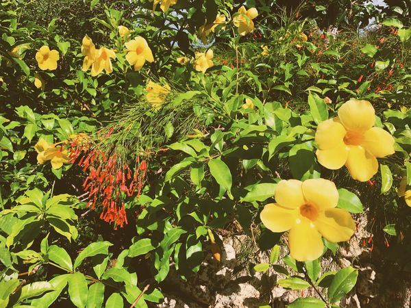 Miyako Island. Flower Growth Nature Freshness Plant Petal Beauty In Nature Fragility Yellow Leaf Blooming Flower Head Outdoors Day No People Springtime Close-up Miyakojima MiyakoIsland Eye4photography  EyeEm Nature Lover EyeEm Best Shots