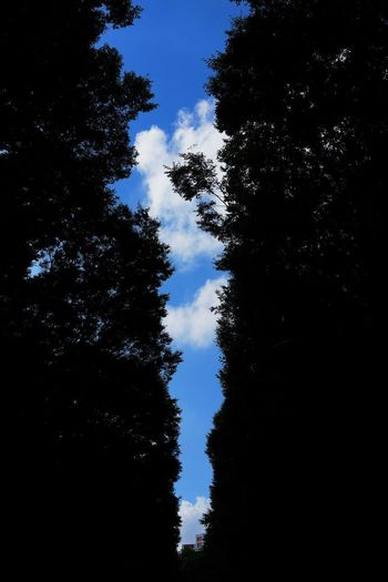 木の隙間から夏空 Tree