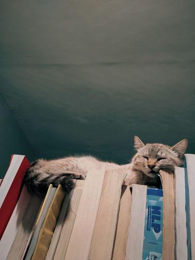 Sleeping cat sitting on a books
