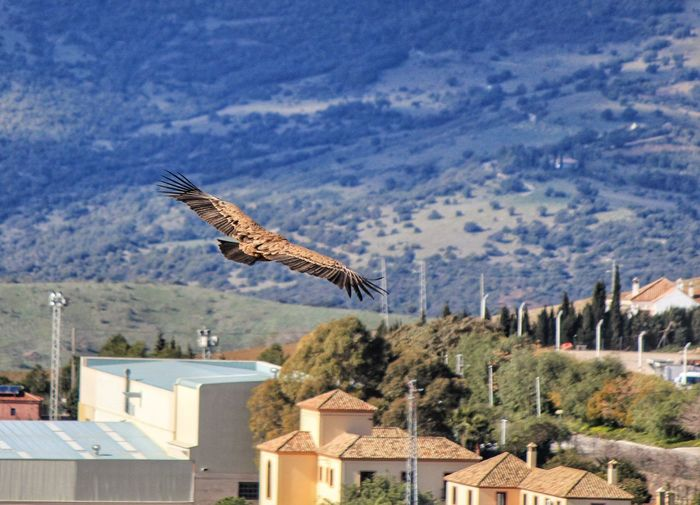 Bird Flying Over Houses Against Mountains