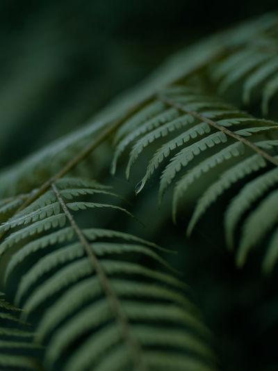 Detail shot of fern leaves
