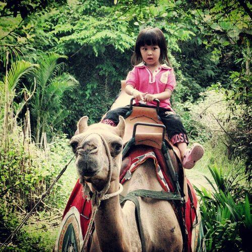 Camel Ride Bali Balimarineandsafaripark Safaripark Tamansafari indonesia vacation