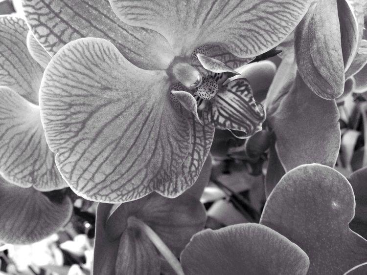 Black & White Taking Photos Flowers