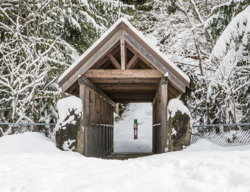 #beautifulbc #Brandywinefallsbridge #supernaturalBC Beauty In Nature Christmas Christmas Tree Cold Temperature Day Forest House Log Cabin Nature No People Outdoors Roof Snow Snowing Tree Weather Winter Wood - Material