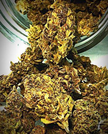 Beautifully Organized Legal Marijuana Oregon