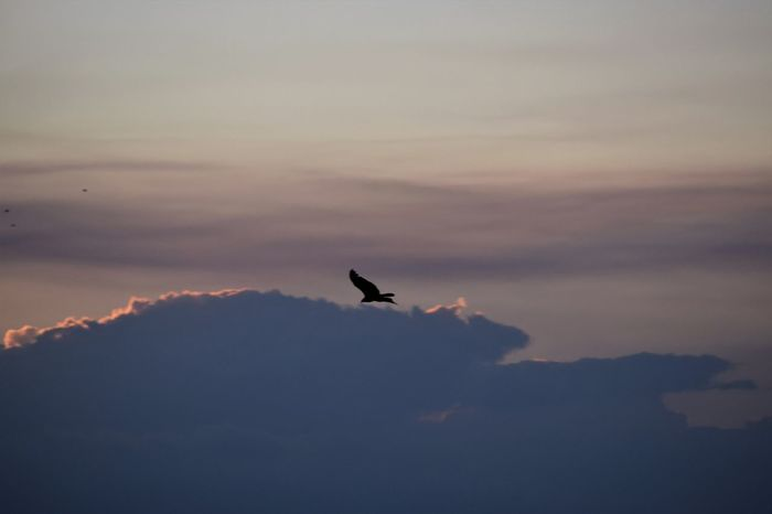 Evening Sky One Bird Flying Beauty In Nature EyeEm Nature Lover Tranquillity Cloud - Sky Flying Nature Scenics - Nature