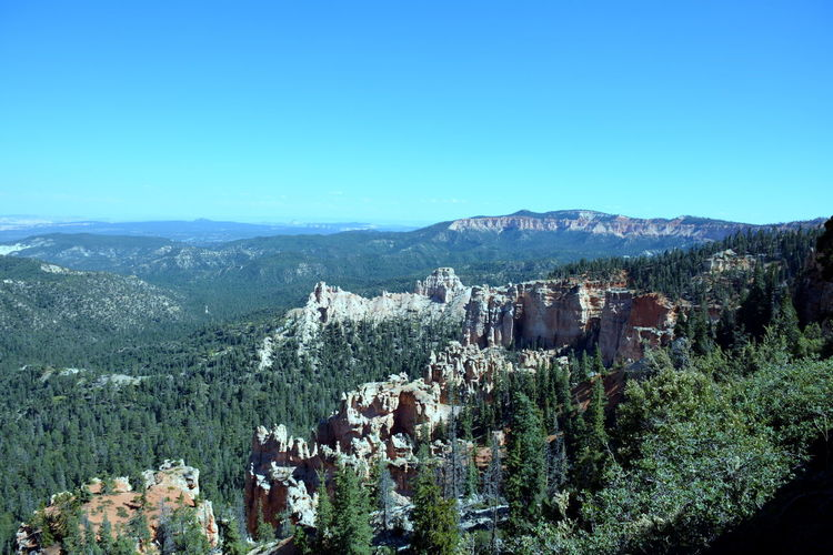 Bryce Canyon, Utah, USA Bryce Canyon National Park Rock Formation Summertime The Week on EyeEm Travel Traveling Travelling Trees View Background Backgrounds Beauty In Nature Bryce Canyon National Park Day Hoodoos Landscape Mountain Nature No People Outdoors Rocks Scenics Summer Tree