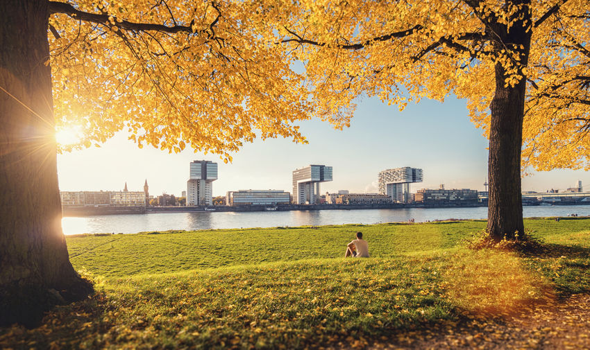 autumn view to the rhine river with crane houses at sunset Cologne Rhine Architecture Autumn Beauty In Nature Branch Building Exterior Built Structure Cologne Cathedral Crane Houses Grass Leaf Leisure Activity Lifestyles Nature North Rhine Westfalia Real People Rheinauhafen River Skyscraper Sunlight Sunset Travel Destinations Tree Water