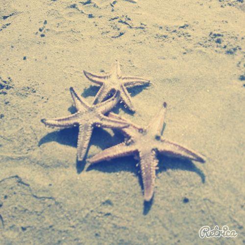 Hi! Summer2015 Summertime Starfish