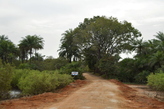 Varela Guinea-Bissau 4x4 Guinea Guinea-Bissau Republic Of Guinea-Bissau República Da Guiné-Bissau Varela West Africa Adventure Africa African Road Day Landscape No People Outdoors Road The Way Forward Tree