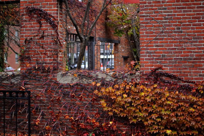 Architecture Bad Condition Branch Brick Brick Wall Building Exterior Built Structure Damaged Day Deterioration Growth House No People Obsolete Outdoors Red Wall - Building Feature Weathered