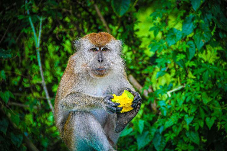 Landscape photo of wild monkeys in kreo cave, semarang, indonesia
