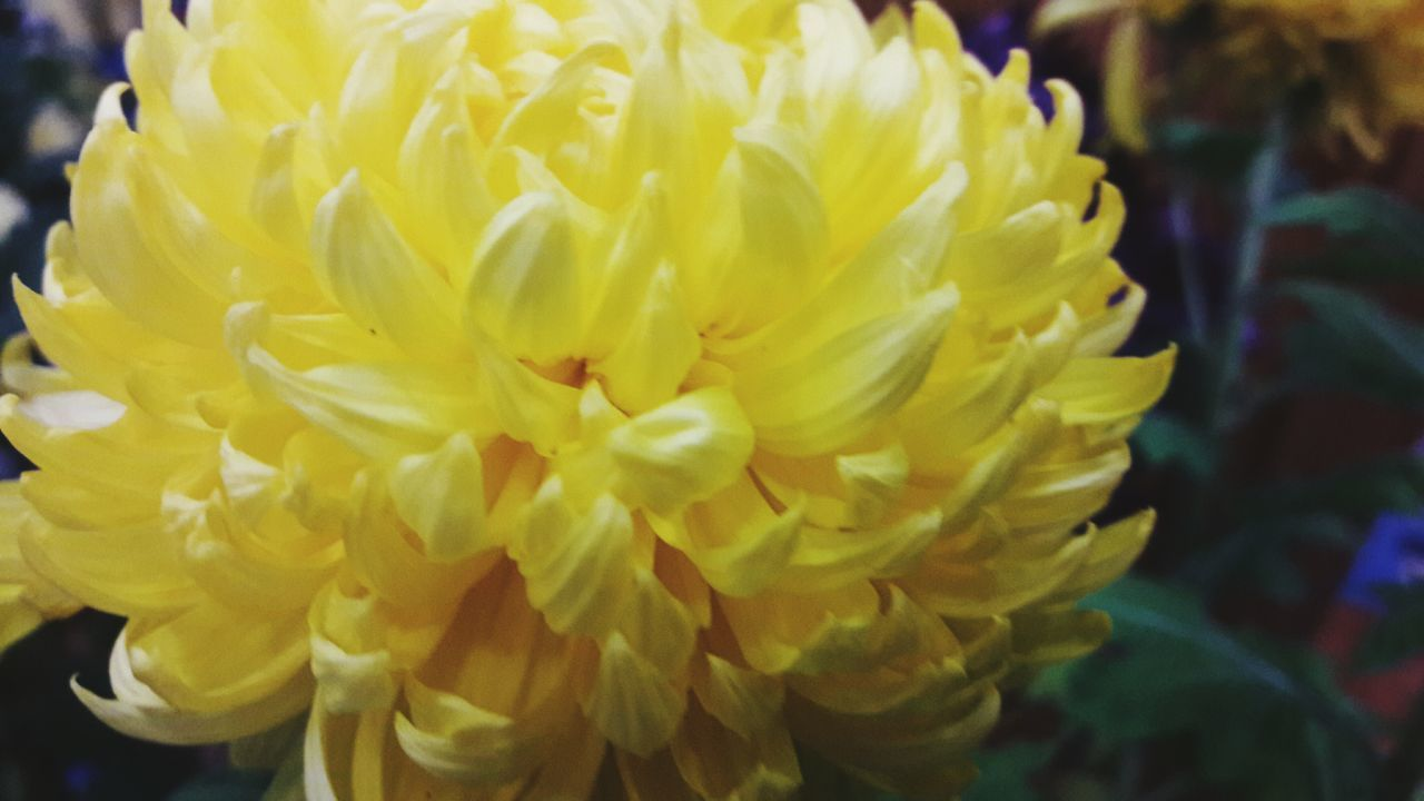 flower, fragility, petal, yellow, close-up, freshness, beauty in nature, flower head, focus on foreground, nature, growth, day, outdoors, no people, springtime