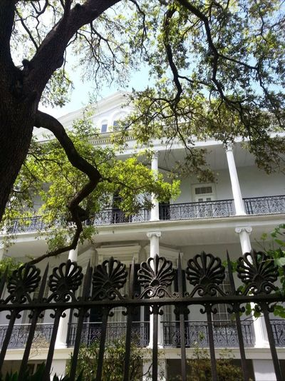 Tree Low Angle View Built Structure Architecture Building Exterior American Horror Story Coven New Orleans Victorian Mansion Luxury City Outdoors Day Sky Branch Nature