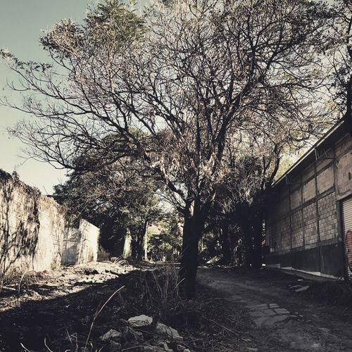 Desolación citadina Streetphotography IPhoneography Monochrome Urban@ndante Tree Landscape City