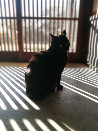 Black Cat Cute Cat Lover Sun Light Cat Sunlight Japanese Traditional House Silhouette Shadow Latice Door Pets One Animal Home Interior Domestic Cat No People Indoors  Day Animal Themes Domestic Animals Mammal