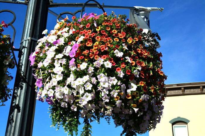 Small town America. Fragility Freshness Flower Growth Beauty In Nature Low Angle View Nature Bouquet Bunch Of Flowers Selective Focus Plant Flower Head In Bloom Petal Day Flower Arrangement Botany Small Town USA Town Montana Nice Things Things I Like Nice Day Colors Color