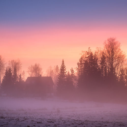 Amazing sunset colors at winter evening landscape in Finland Amazing View Evening Light Finland Nature Pink Scenic Atmospheric Mood Beauty In Nature Cold Temperature Colorful Fog Foggy Landscape Mist Nature No People Outdoors Purple Scenery Scenics Sunset Tranquil Scene Tranquility Tree Winter