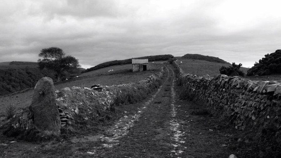 Black & White Exmoor