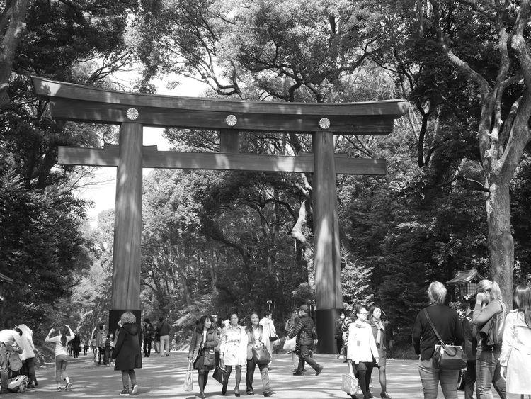 Japan Tokyo Shrine Meiji-Jingu Take Photos Harajuku