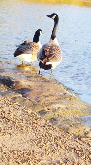 Bird Nature Animals In The Wild Animal Themes Water Beach Animal Wildlife No People Outdoors Day