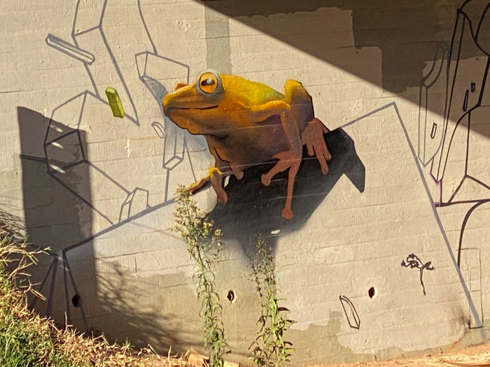 High angle view of parrot perching on wall