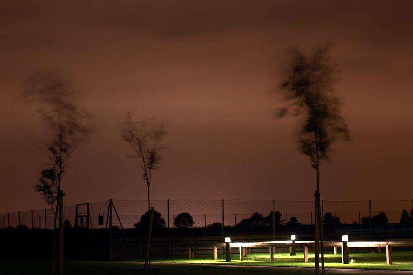 Cambridge Light Pollution. Silhouette Trees Night