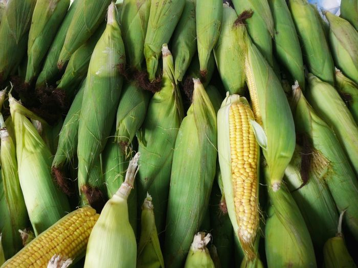 Corn Fresh Corn Fresh Vegetables Corn In The Husk Showcase April Nature's Diversities The Essence Of Summer No People Group Of Objects