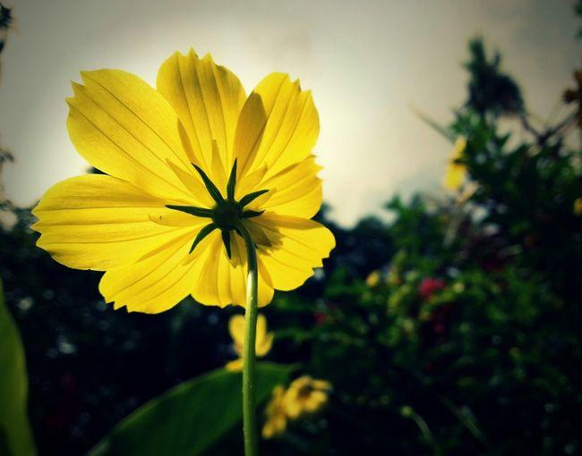 Enjoying Lif Nature Flower Photography Enjoying Nature Hello World