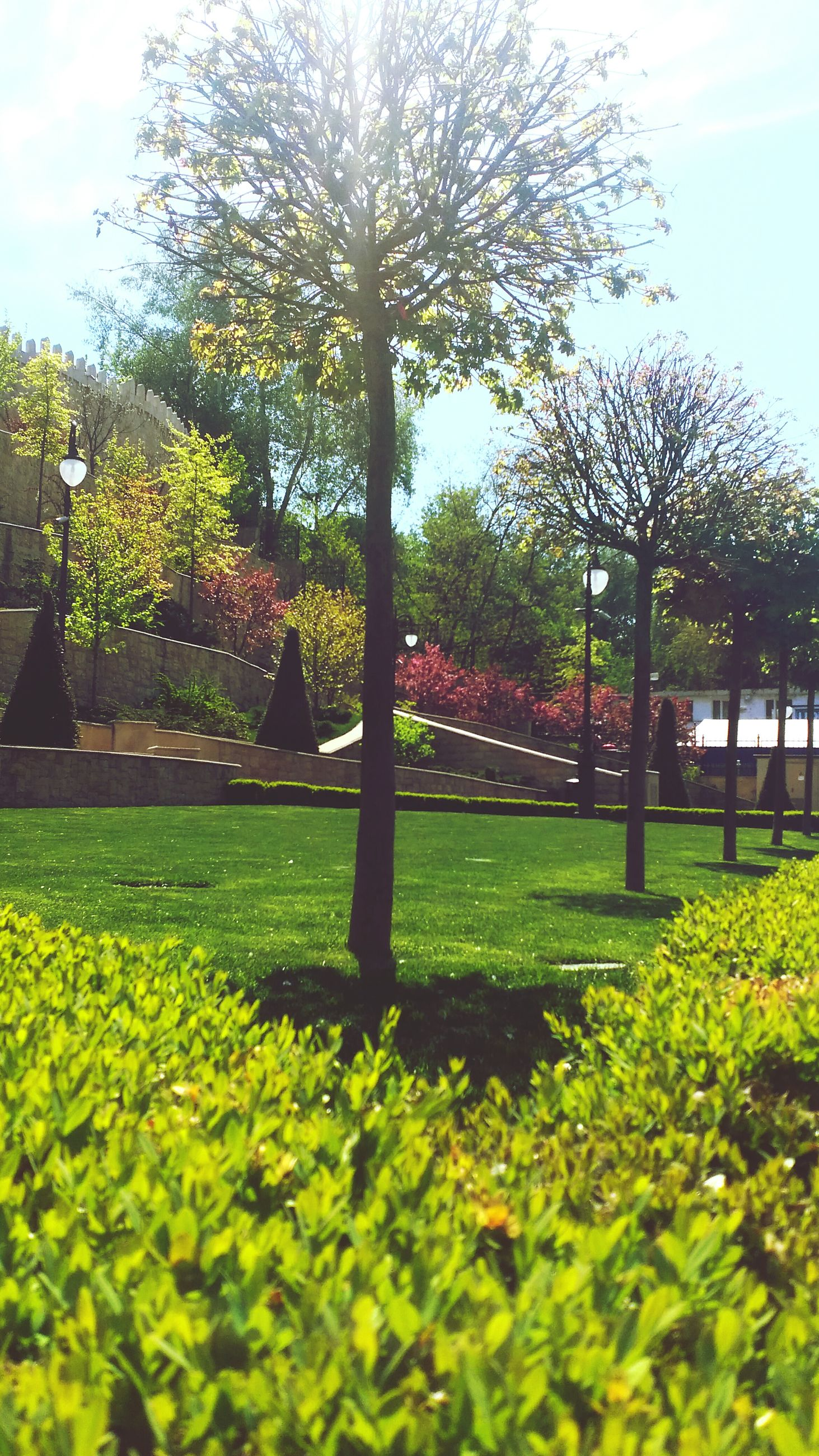 tree, park - man made space, grass, growth, lawn, flower, green color, sunlight, park, nature, built structure, sky, architecture, beauty in nature, plant, building exterior, garden, formal garden, tranquility, freshness