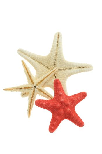 Isolated starfish Nobody Souvenir Three Isolated White Background White Seestern Sea Star Nobody Three Cut Out Starfish  Star Shape Shape Starfish  Cut Out Sea Life No People Marine Sea Red White Background Animal Themes Decoration Close-up