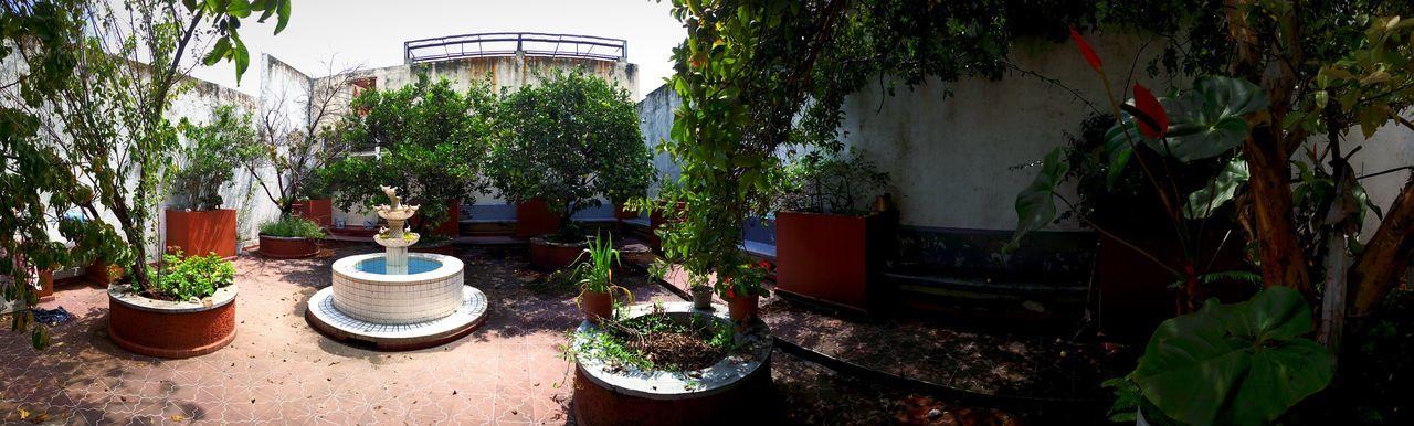 El Jardín de la Abue! Grandma's House Grandmas Garden Gardens Water Tree Front Or Back Yard Potted Plant Plant Fountain Panoramic