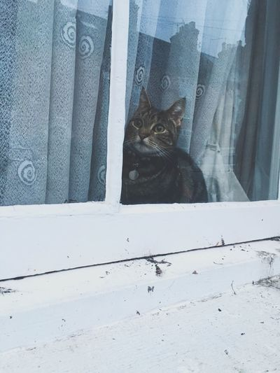 Outside window cat 😻 Catinwindow Cat Animal Beautiful