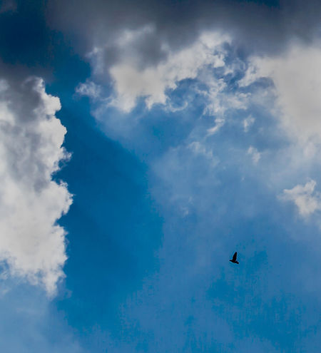 Insignificant and Alone Abandoned Alone Atmosphere Bird Blue Sky Breakthrough Cloud Cloudscape Cloudy Escape Flying Insignificant Isolated Journey Outdoors Overwhelmed Rays Silhouette Single Bird Sky Small Storm Cloud Sun Rays Weather White Clouds