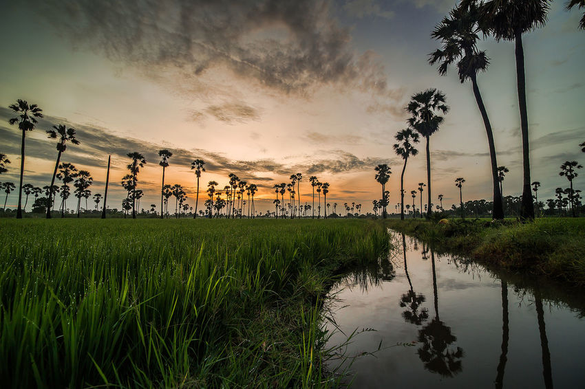 Tree Tennis Sport Water Agriculture Sunset Match - Sport Rice Paddy Sky Cloud - Sky