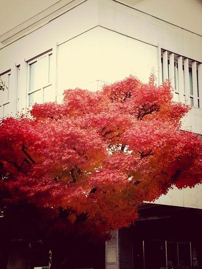 紅葉 秋→冬