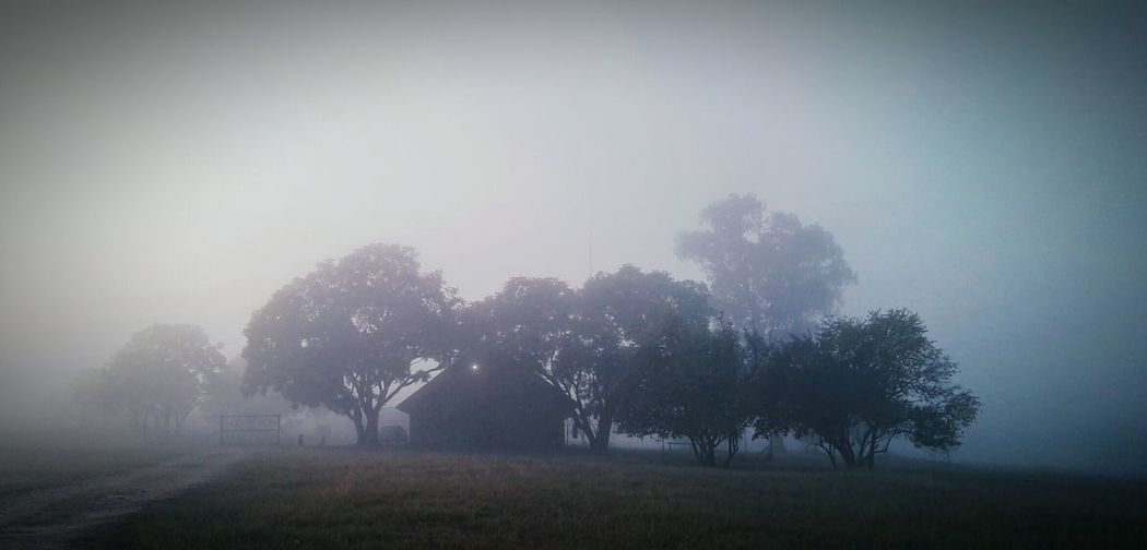 Winterscapes Winter Landscape Winter Morning Winter Mist Misty Morning Misty Day Trees In Winter Winter Wintertime Winter On A Farm Muldersdrift, South Africa Gloomy Weather First Eyeem Photo