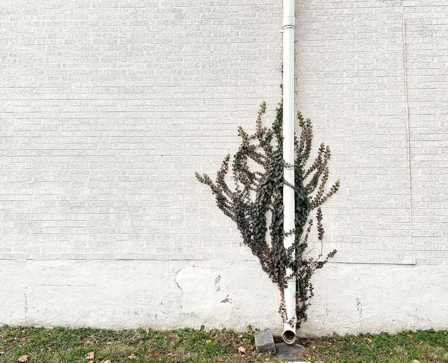 Plant growing against wall