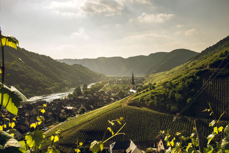 Sunset in wineyards with views on river and village - Bremm and Senheim on the Moselsteig in Germany Hiking Mosel Agriculture Architecture Beauty In Nature Cloud - Sky Flower Germany Growth Idyllic Land Landscape Moselsteig Mountain Mountain Range Nature No People Outdoors Plant Rural Scene Scenics - Nature Sky Sunset Tranquil Scene Winemaking