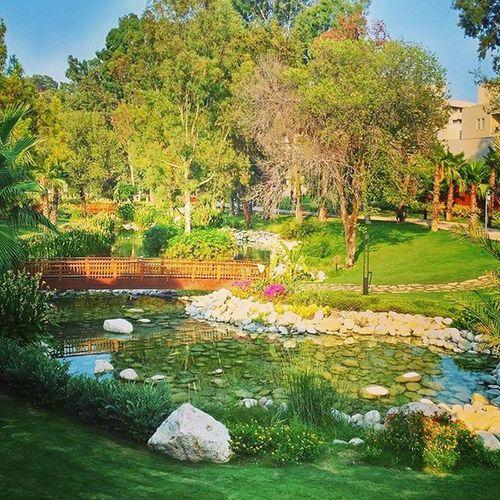 турция отдых видсбалкона пруд цветы камушки зелень  красота Asuspadfones Rixospremiumtekirova Rixos Rixostekirova Turkey Kemer Antalya лето 2015