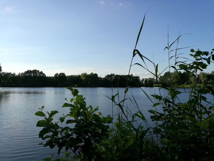 Lake Water Plant Nature Growth Tree No People Beauty In Nature Tranquility Outdoors Day Sky Freshness Travel Destinations Holiday Plants Animal Themes Cloud - Sky Tranquility Beauty In Nature Scenics Tranquil Scene Nature Tree Altmark