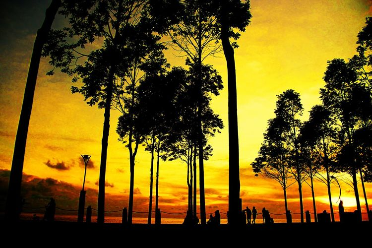Sunset Silhouette Tree Scenics Tranquil Scene Beauty In Nature Orange Color Tranquility Group Of People Tree Trunk Nature Idyllic Sky Branch Sun Dark Twilightscapes Landscape_lovers Landscape_photography Low Angle View Vision Is Seeing Beyond What's In Front Of You Atmospheric Mood Dramatic Sky Calm Fresh On The EyeEm